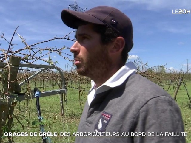 Orages de grêle dans le Rhône-Alpes : des producteurs de fruits et légumes au bord de la faillite