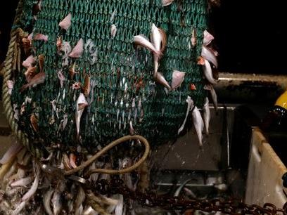 Pêche post-Brexit : les conditions imposées par Londres sont « nulles et non avenues », affirme Franck Riester