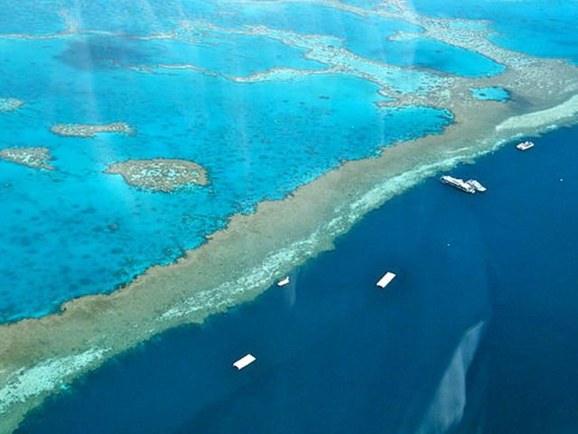 Désespérée, l'Australie lance un ultime appel à l'aide pour sauver sa barrière de corail
