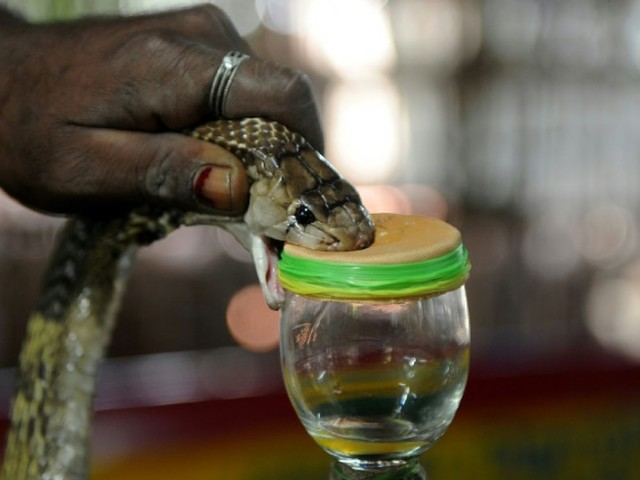 Après la dengue, le paludisme et le Covid, un Anglais survit à une morsure de cobra en Inde