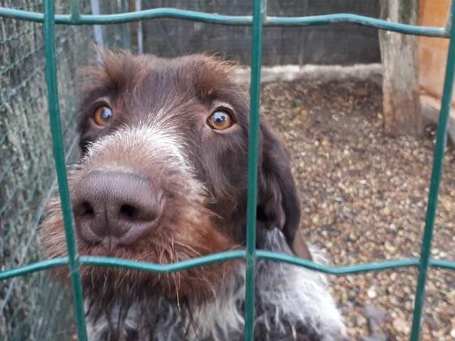 """""""Il y avait urgence"""": le refuge animalier de Châtelaillon a reçu un don de trois tonnes de croquettes"""