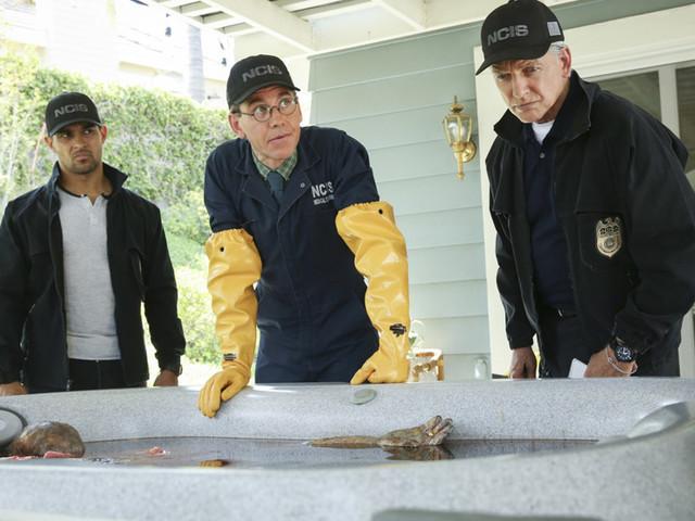 «NCIS» revient pour une saison 16 le 6 décembre sur M6