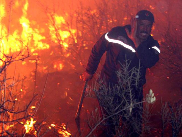 Incendies : 32.000 hectares de forêts dévorés par les flammes