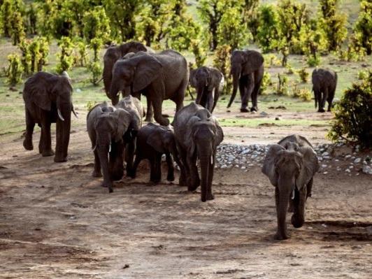 L'Afrique australe prête à tourner le dos au monde pour vendre son ivoire