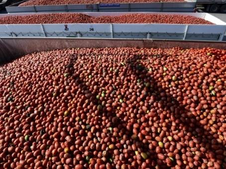 Mutti, le roi italien de la tomate se veut exemplaire dans un secteur critiqué