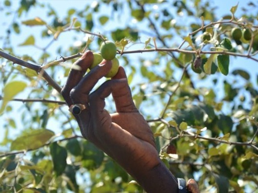 Sénégal : le village de Daga Birame à l'heure de l'agriculture intelligente