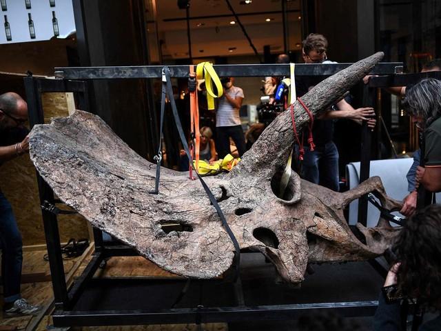 Des squelettes de dinosaures vendus aux enchères, des paléontologues frustrés