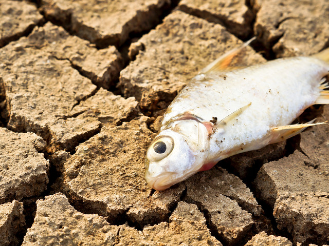 Réchauffement climatique : un tiers des plantes et des animaux pourrait disparaître d'ici 50 ans