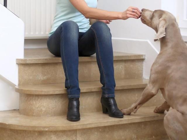 Trop stressée à cause de son chien blessé, elle est virée car son patron en a marre de ses arrêts maladie à répétition