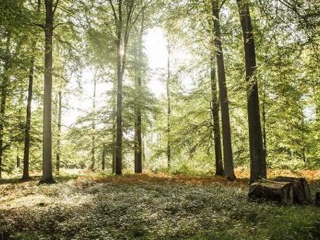 L'Université d'Anvers s'intéresse à l'influence de la nature sur la santé