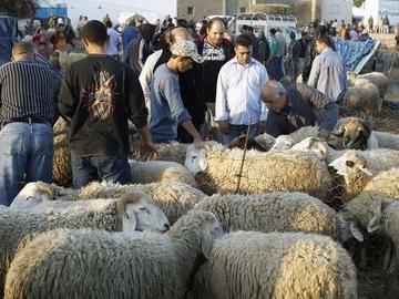 Tunisie: Aïd Al Adha, quantité disponible, prix et préparatifs du ministère de l'Agriculture