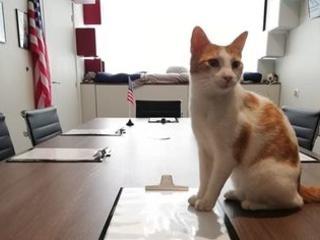 Un escape game pour se préparer au jour où les chats prendront le contrôle du monde