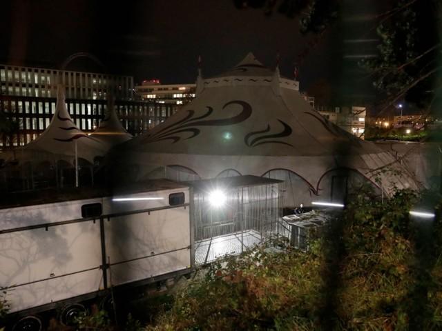 Paris. Tigre de cirque abattu : le propriétaire va porter plainte