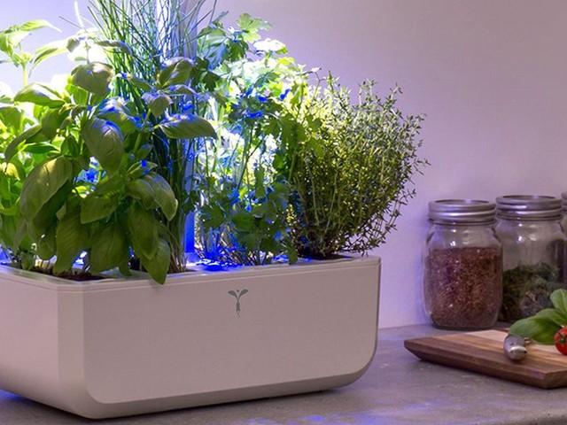 Faites pousser vos propres fruits et légumes dans votre appartement avec ce potager made in France