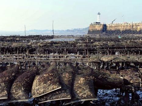 Les huîtres malmenées par le réchauffement climatique