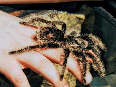 Contre l'arachnophobie, regardez «Spider-Man»!