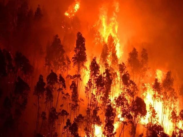 Espagne: Un violent incendie ravage quelque 3400 hectares à l'île de Grande Canarie