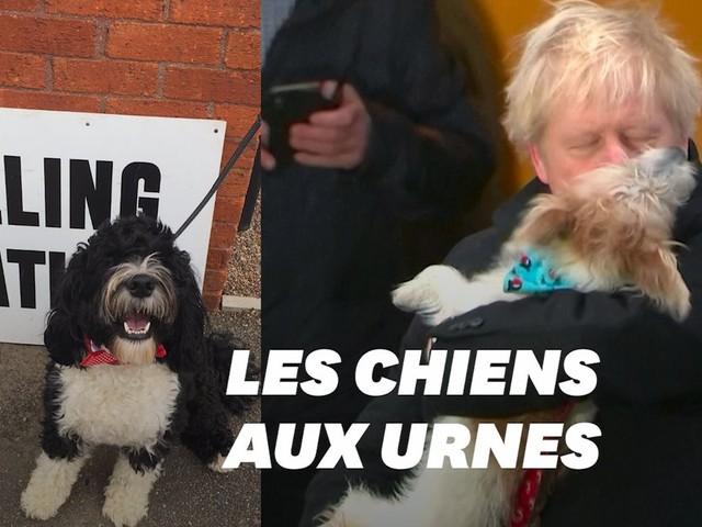 Boris Johnson et les Britanniques votent avec leurs chiens