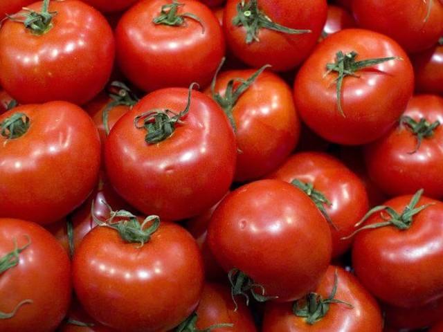 Pourquoi la tomate marocaine a été bloquée en Russie ?