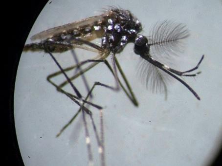 Appel à la vigilance face aux cas de transmission locale de dengue et de zika