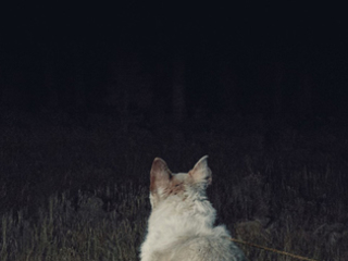 It Comes At Night : l'interview terreur