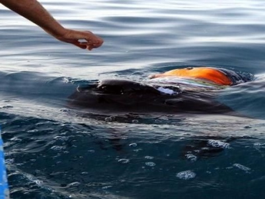 Collision maritime au large de Kerkennah : 9 nouveaux corps repêchés