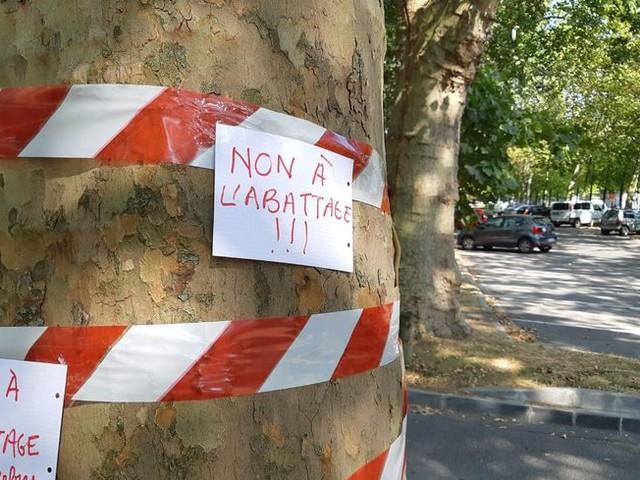 Chantier des basses promenades à Reims : polémique sur l'abattage de 163 arbres