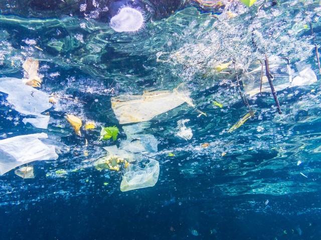 Nous avalons environ cinq grammes de plastique par semaine