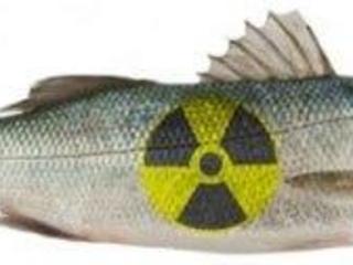 Brève - Complicité radioactive.