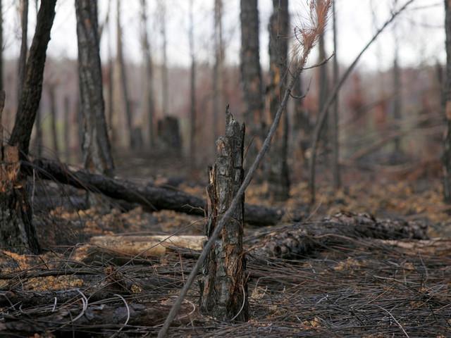 Plus de 150 hectares de pins détruits dans un incendie en Charente-Maritime