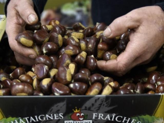 Châtaigne d'Ardèche: les producteurs vont être indemnisés après la sécheresse