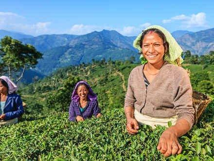 Nos destinations de voyages autour du thé