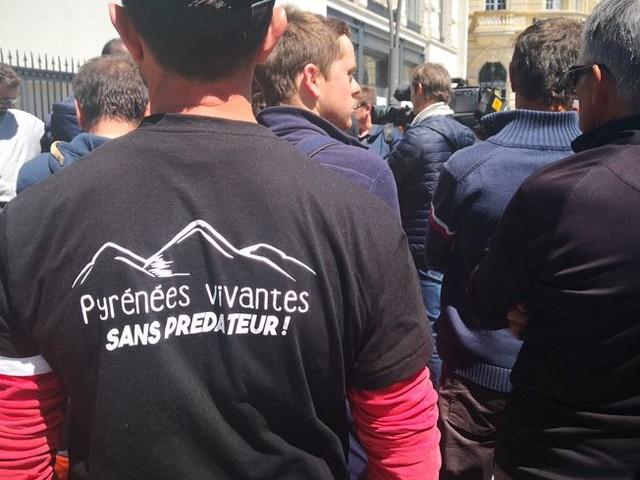 Pyrénées : les éleveurs bientôt prévenus de la présence de l'ours par SMS