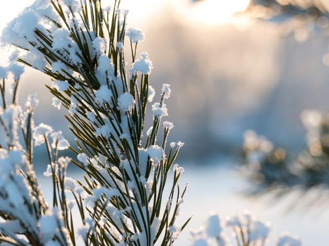 Le saviez-vous ? La langue écossaise a 421 mots et expressions pour désigner la neige