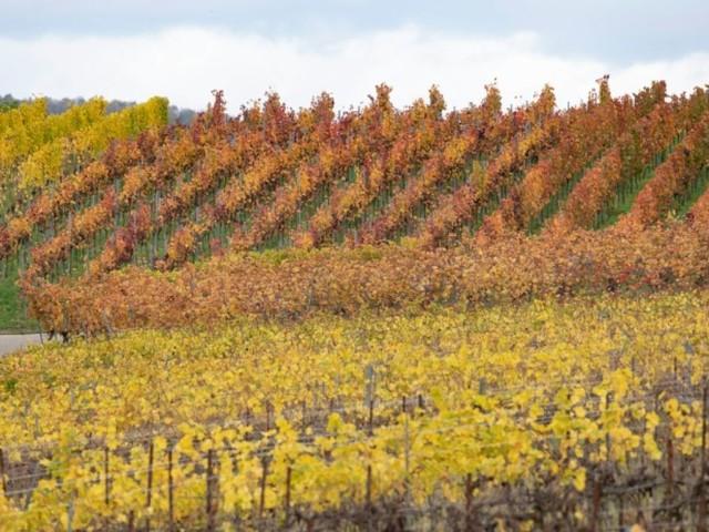 La moitié des vignobles mondiaux menacés par un réchauffement de 2°