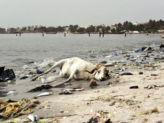 Peut-on être journaliste environnemental sans être militant ?