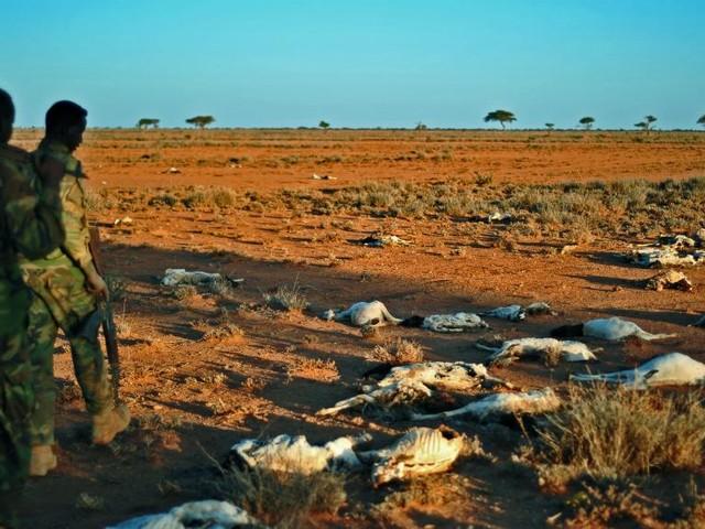 [Reportage] Somalie: la solidarité, seul refuge face à la sécheresse qui sévit