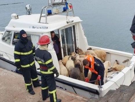 VIDÉO. Un cargo chavire avec 14 600 moutons à bord