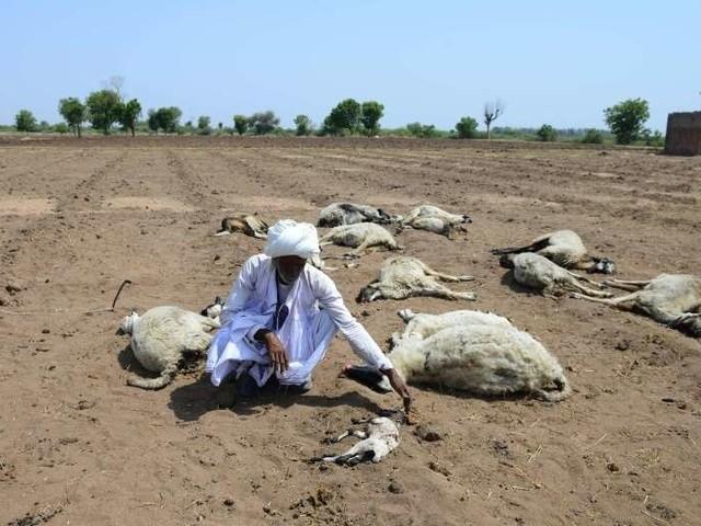 La sécheresse en Inde provoque des comportements inhabituels chez les animaux