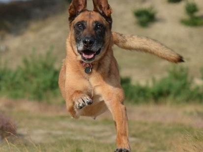 Gobi, premier chien a participé au Marathon de Paris 2019