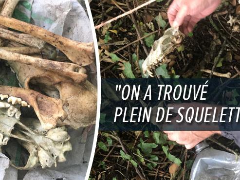 """Maltraitance animale à Trazegnies? Le mystère des """"crânes fracassés"""" retrouvés par Anne-Manuella"""