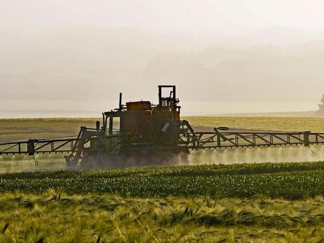 Découverte d'une alternative au glyphosate 100 % naturelle et écologique… à base de sucre !