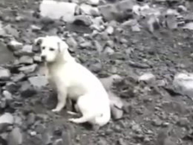 Ce chien triste recherchant son maître après l'éboulement a ému en Chine