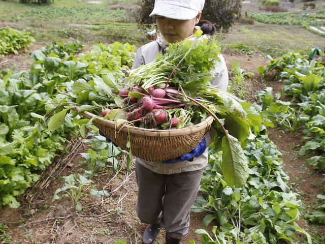 La Tunisie à l'heure de la permaculture