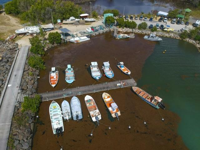 En Guadeloupe, une conférence internationale contre le fléau des sargasses