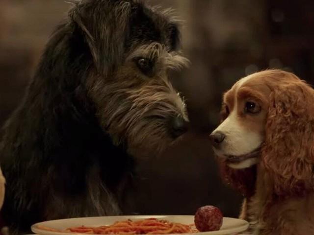 """Ce que """"La Belle et le Clochard"""" sur Disney+ révèle des maîtres et leurs chiens"""