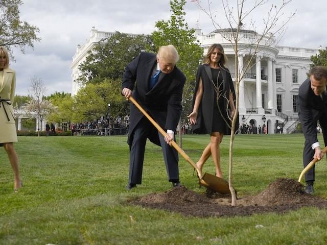 Petit arbre parti trop tôt : RIP le chêne offert à Trump par Macron