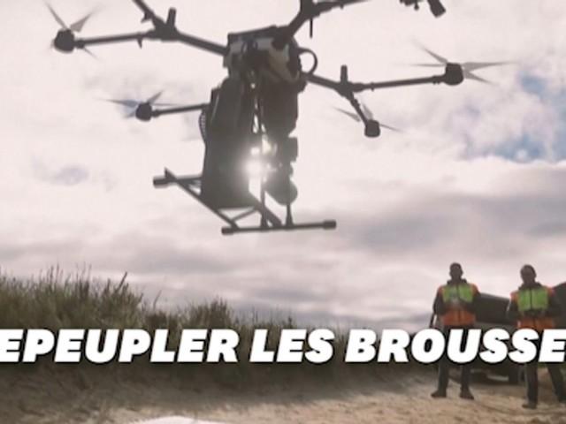 Après les feux en Australie, des drones pour replanter les brousses