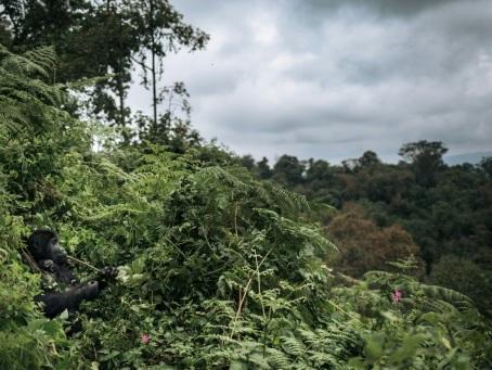 Un tiers de la flore tropicale africaine potentiellement menacée d'extinction