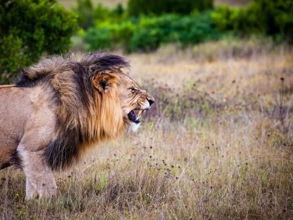 «Ça valait le coup de le tuer pour cette photo»: des gérants d'un Super U fustigés pour leur safari-chasse